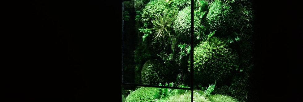The Aegis ZERO, Geometric Terrarium with Moss Wall