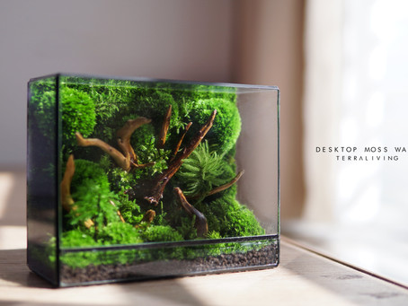 Desktop Preserved Moss Wall Terrarium by TerraLiving delivers a slice of Malayan Rainforest to you