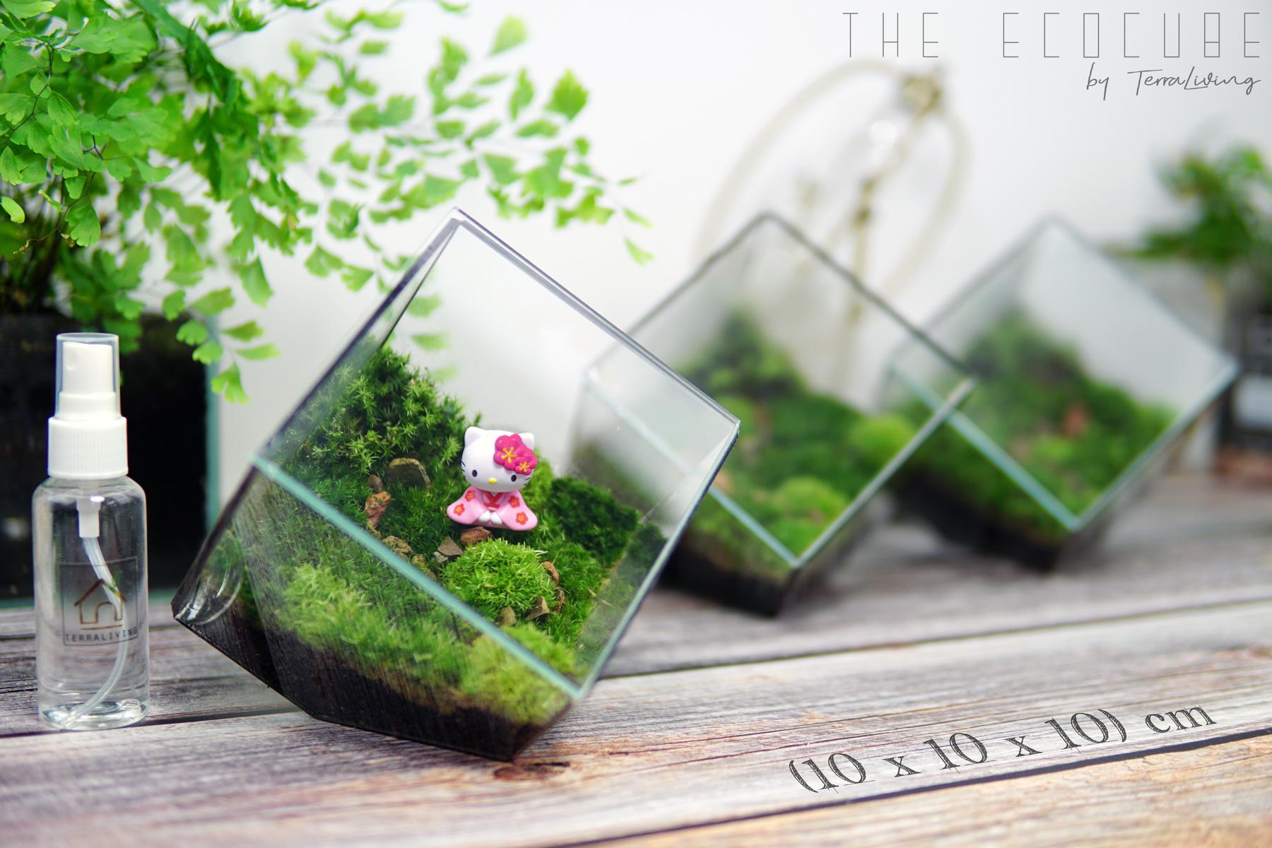 the EcoCube