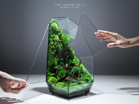 The Nephrite - L, a preserved moss geometric terrarium by TerraLiving
