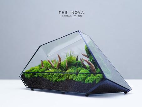 "Best of ""The Nova"" series, geometric preserved moss terrarium by TerraLiving"