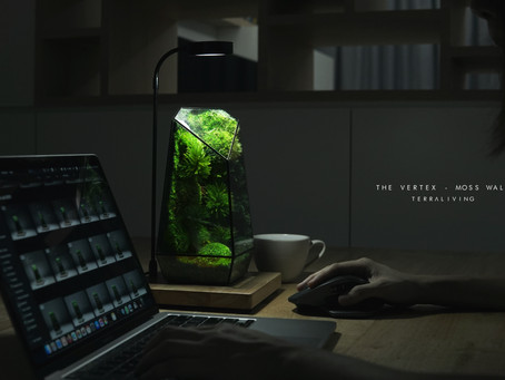 A Sunday with the Vertex - Preserved Moss Geometric Terrarium by TerraLiving