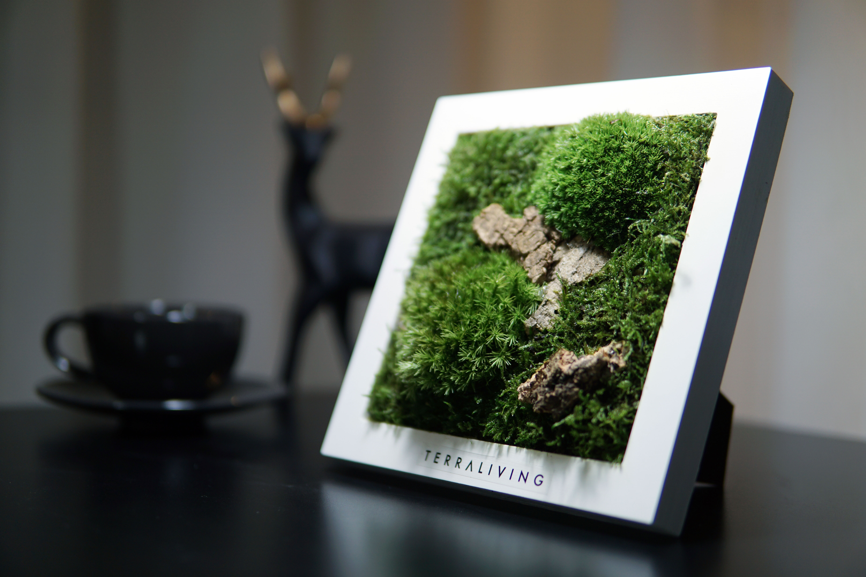 Moss Frame ZERO