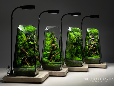 2021 Unique Collection: The Best of TerraLiving, The Vertex Family (S), Preserved Moss Terrarium