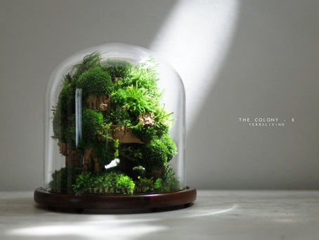 The Colony - X by TerraLiving, a preserved moss botanical collection terrarium.