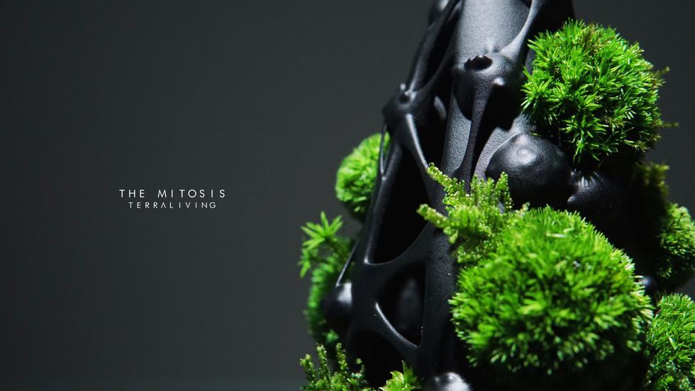 mitotis-terraliving_8.jpg