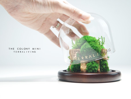 The Colony Mini, a Botanical Collection by TerraLiving, Preserved Moss Terrarium
