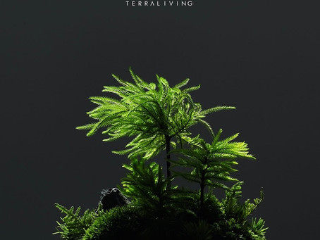 The Rainforest ZERO (M) - Tree Moss Forest, a ZERO Moss botanical collection by TerraLiving