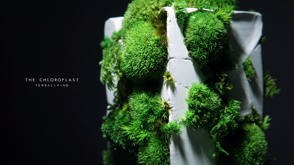 chloroplast-1.0_4.jpg