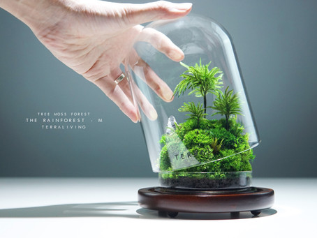 The Rainforest (M) - Tree Moss Forest, Preserved Tree Moss Terrarium by TerraLiving