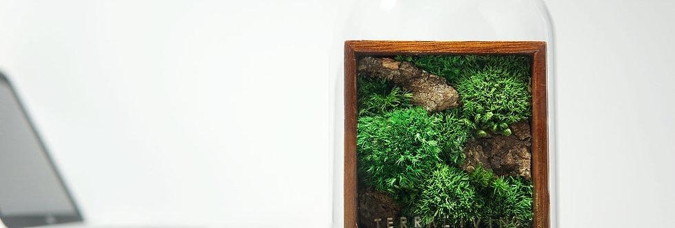 The Mosser (S) - Botanical Herbarium Collection