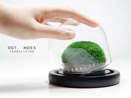 Dot. Moss, a preserved moss terrarium, botanical collection by TerraLiving