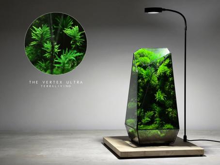 The Vertex - Ultra, a preserved moss terrarium, segmented glass geometric terrarium by TerraLiving