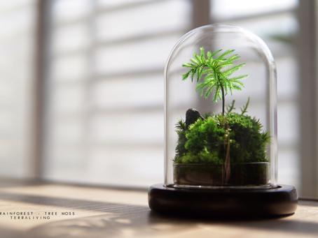 The Rainforest - Preserved Tree Moss Terrarium by TerraLiving