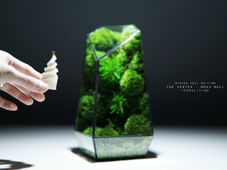 The Vertex - Winter 2021 Christmas Limited Edition Preserved Moss Terrarium by TerraLiving