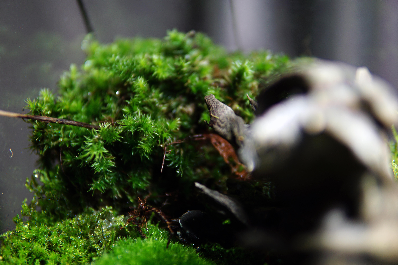 the ChronoPod - Mossy ForestnoPod