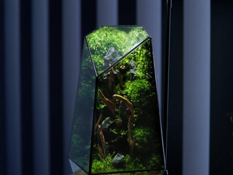 The Vertex - Preserved Moss Wall Terrarium in Geometrical Glass Sculpture by TerraLiving