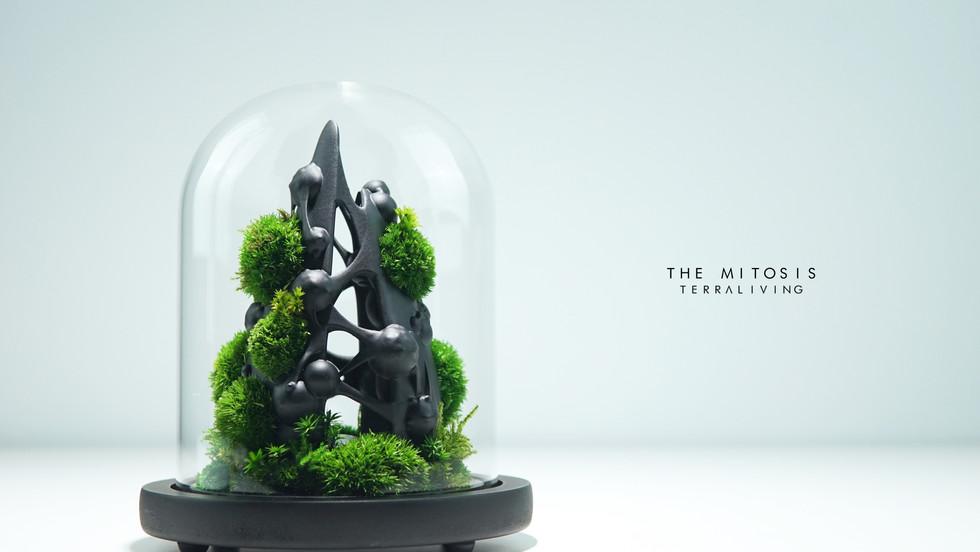 mitotis-terraliving_1.jpg
