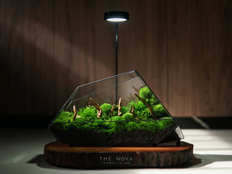 The Nova  - Modern and Futuristic Preserved Moss Geometric Terrarium by TerraLiving