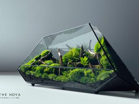 The Nova - a Geometric Terrarium, Botanical Art Preserved Moss Collection by TerraLiving