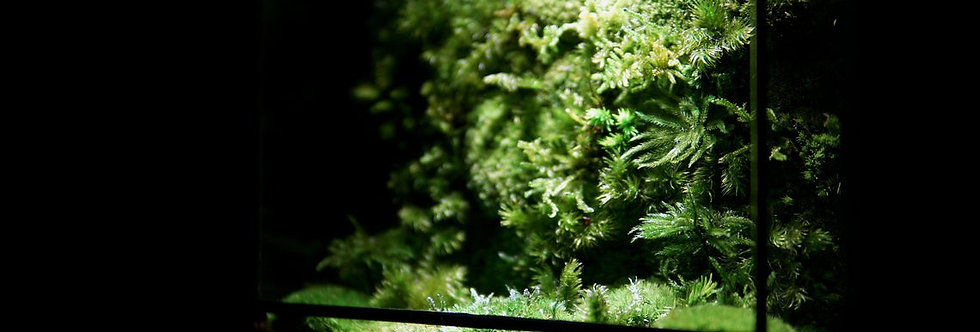 Desktop Moss Wall ZERO - Pure Moss Wall (S), Limited Edition Quarterly Release
