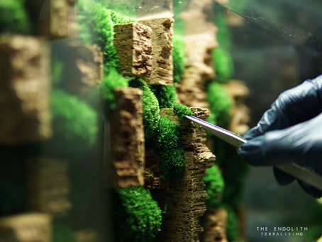 The Endolith - Desktop Grade Preserved Moss Wall Terrarium by TerraLiving