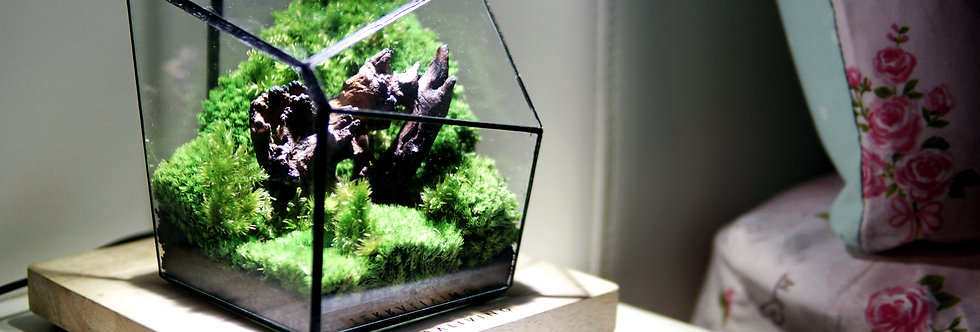 The EcoCube - Y (Heart of Forest), ZERO Moss Geometric Terrarium