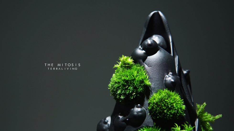 mitotis-terraliving_10.jpg