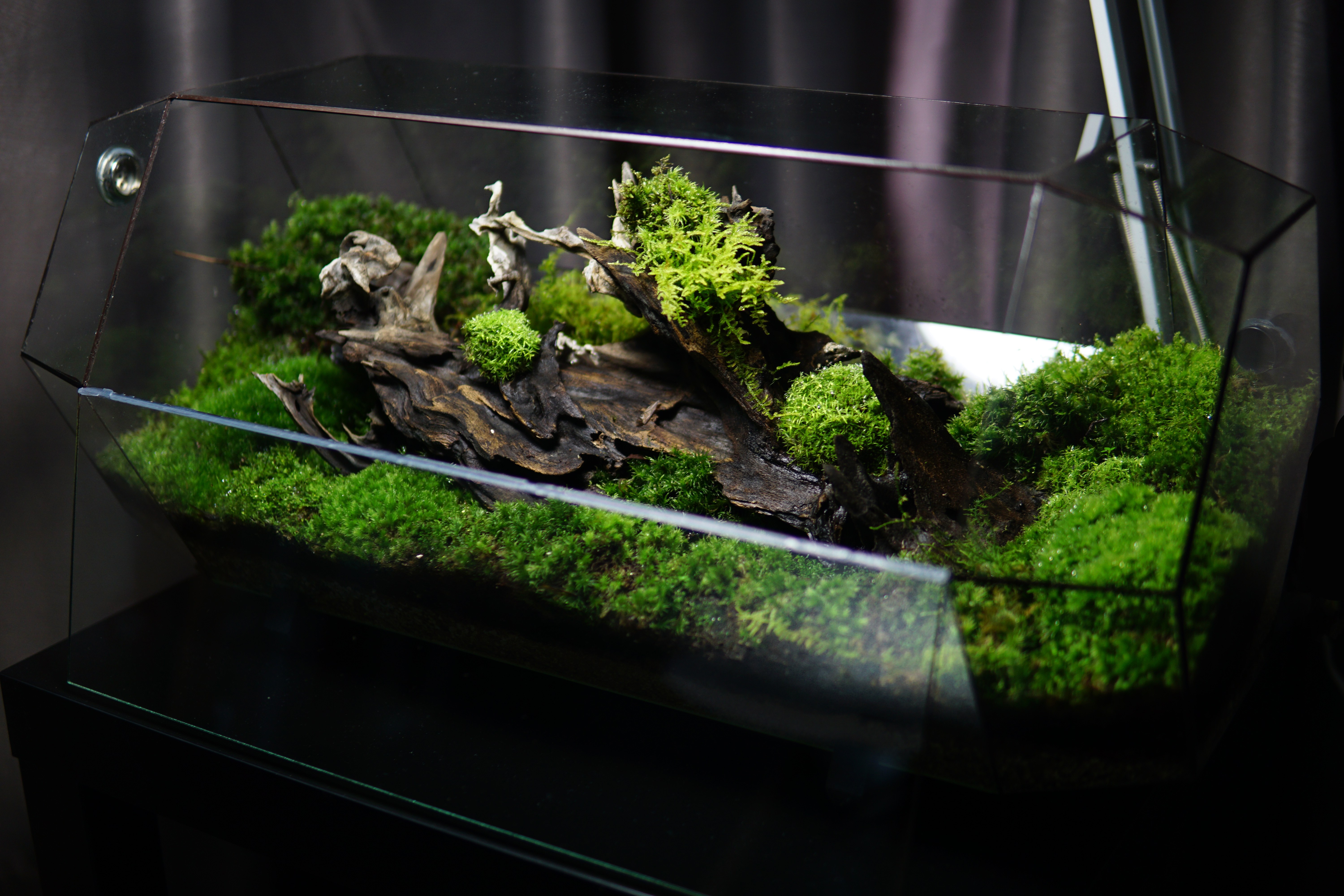 the ChronoPod - Mossy Forest