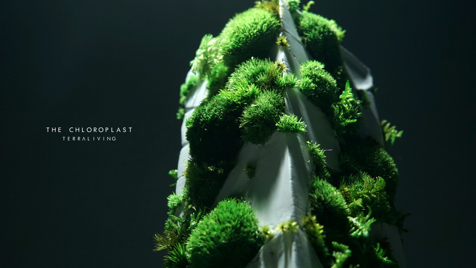 chloroplast-1.0_3.jpg