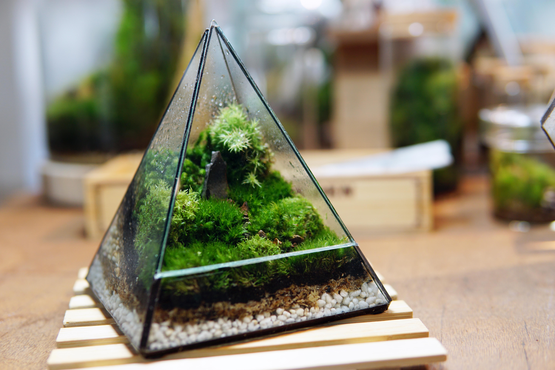 Mossy Pyramid