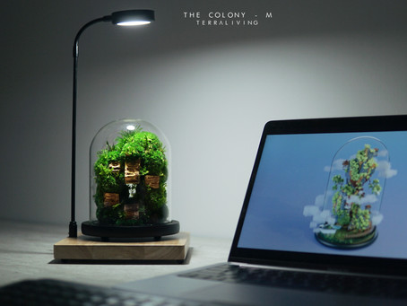 The Colony - M, ZERO Moss, Preserved Moss Terrarium, Botanical Collection by TerraLiving