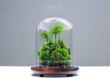 Your future best friend for your desk, this mossy forest is like terraforming for your desk!