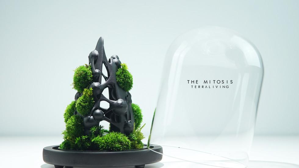 mitotis-terraliving_3.jpg