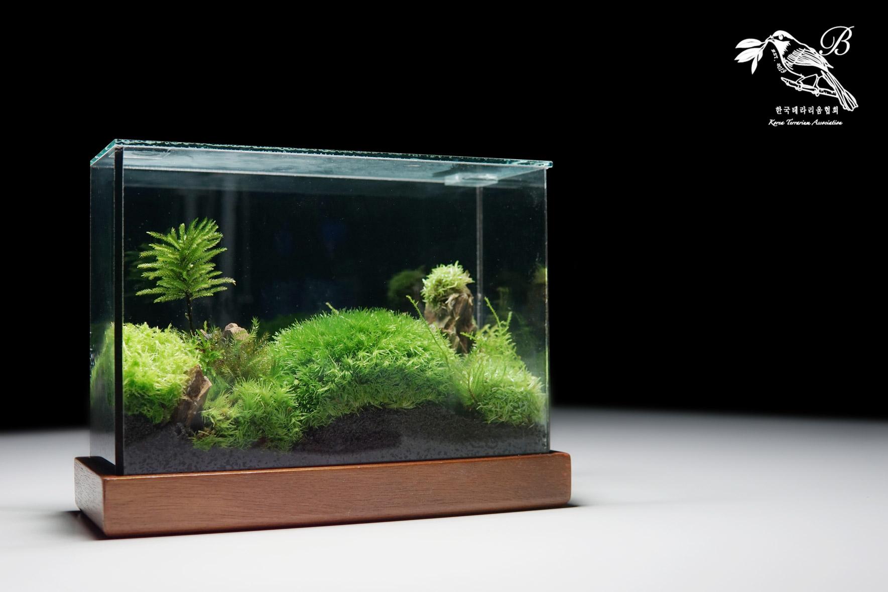 Moss Box