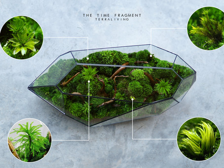 The Time Fragment - Preserved Moss Geometric Terrarium by TerraLiving