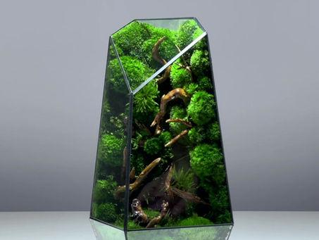 "The inner world of ""The Vertex - L"", a preserved moss geometric terrarium by TerraLiving"