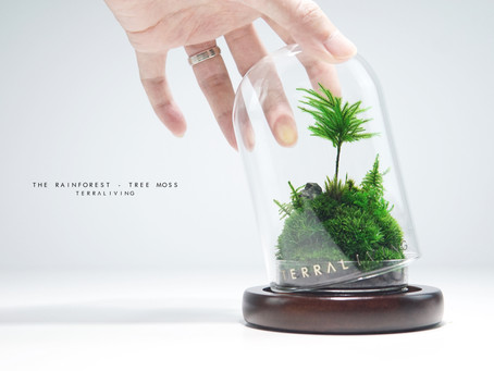 The Rainforest - Tree Moss, a ZERO Moss Botanical Collection by TerraLiving.