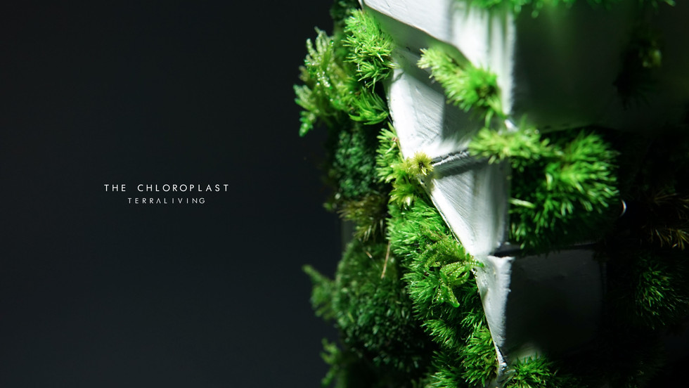 chloroplast-1.0_7.jpg
