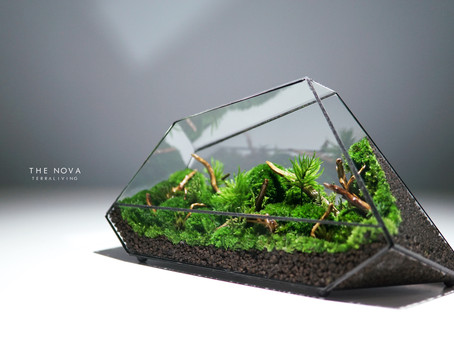 The Nova - a Preserved Moss Geometric Terrarium by TerraLiving