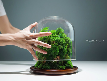 The Colony - X, a luxurious botanical sculpture by TerraLiving.