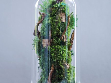 The Colony - L, botanical sculpture in bell-jar terrarium by TerraLiving