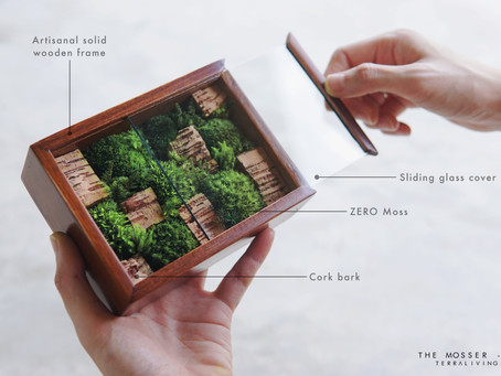 Botanical Art in a box, The Mosser - X by TerraLiving