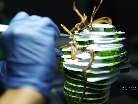 """Behind the scenes of """"The Heart"""" parametric sculpture, a preserved moss wall terrarium"""