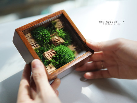 The Mosser - X, preserved moss specimen collection box by TerraLiving