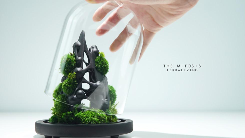 mitotis-terraliving_2.jpg