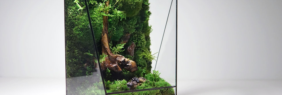 The Horizon - Heart of Forest, ZERO Preserved Moss Terrarium
