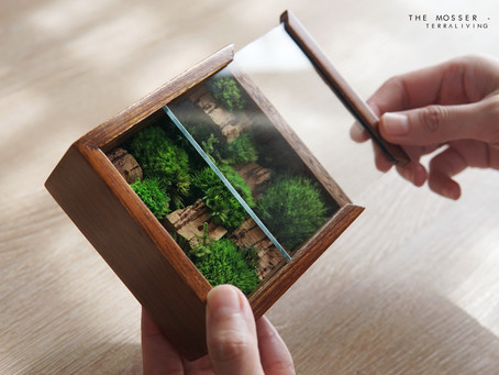 The Mosser - X, a Botanical Collection, Preserved Moss in Mahogany Box by TerraLiving