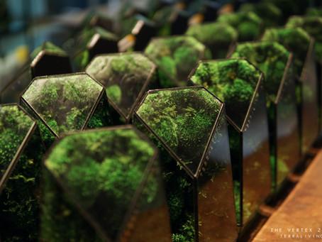 The Vertex - preserved moss geometric terrarium, long term observation by TerraLiving