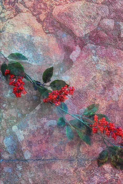 Red Berries Pink Rocks